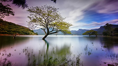 Lake Tree (kevinkishore) Tags: trees tree travel water waterfront reflection green blue color mountains mountain sky clouds cloudscape landscape longexposure nd pollachi valparai outdoor