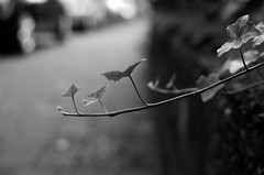 ....... :)  ........ :) ...... (Claudio Taras) Tags: street shadow bw macro monocromo nikon bokeh natura monochrom claudio biancoenero trier taras streetshot contrasto