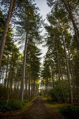 Canopy (Nick.Richards) Tags: trees nature forest woodland landscape woods nikon explore nickrichards canopy exploration lightroom blackpark woodlandwalk d7100 nikon1685 nikond7100