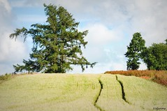 02072016-_DSC0046 (vidjanma) Tags: paysage sillons crales