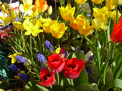 May2013 016 An abundance of tulips (monica_meeneghan) Tags: flowers spring coth naturescarousel blinkagain frogpondflorals