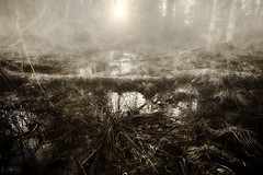 To the Dagobah system (Tmuussoni) Tags: sunset sun tree water grass fog zeiss forest canon foggy sharp swamp mysterious manualfocus 21mm canoneos5dmarkii zeiss21mmf28distagontze