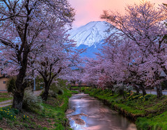 Fuji - Sakura - Sunset (NatashaP) Tags: longexposure bridge sunset mountain japan river spring fuji dusk le sakura hdr oshinovillage nikkor2470 nikond800