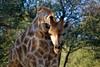 Namibia Photo Safari 19