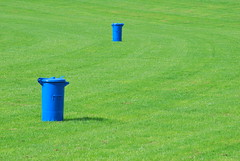 Clean green (Scilla sinensis) Tags: blue green lawn dustbin