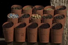 herbs and tea in barrels (Ren Mouton) Tags: shop market herbs barrels egypt winkel markt aswan kruiden ton egypte  asuan   syene mir assoean  swentet