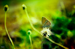 Captivating Calmness (Keyan Klicks) Tags: life abstract macro green art colors yellow photoshop canon butterfly painting insect fly still wings charm silence stillness photoart floraandfauna calmness lightroom captivating 550d