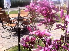 Restaurant Vama Veche Suceava - Grădina de vară