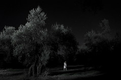 (Farlakes) Tags: tree night forest darkness olive creepy encounter farlakes