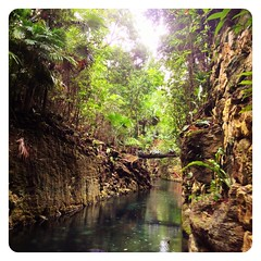 Verde Paisajes. (infa_reds) Tags: lighting vacation art rio forest river mexico perspective playadelcarmen tourist jungle 365 xcaret photocontest summervacation drifting iphone picoftheday bestphoto lazyriver 2013 uploaded:by=flickrmobile flickriosapp:filter=nofilter