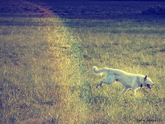 jumping through the rainbow (sara_gambelli) Tags: dog nature animal cane rainbow nikon natura arcobaleno animali nikond7000