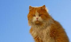F003189_02 (fotoliber) Tags: monroyo teruel españa gato gat cat animal nikon d200 chat