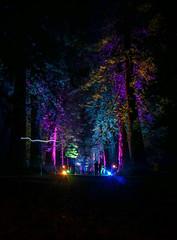 Redwood Avenue Benmore (Caledonia84) Tags: longexposure trees light gardens scotland forrest glowing giants redwood 1855mm dunoon benmore sonynex5r