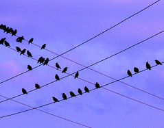 Crossed Wires - More Decisions (Ben Tideway) Tags: birds wires crossedlines