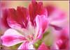 Il gioco dei colori 26 (alessandrosantalucia) Tags: flickrsfinestimages1 flickrsfinestimages2 flickrsfinestimages3