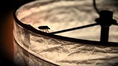 InBilico (mleo87) Tags: animali luce lampada vita equilibrio bilico cimice aforisma