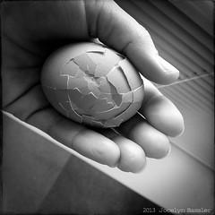 #338 - Cracked (Jocelyn Bassler) Tags: blackandwhite broken hand egg cracked hardboiled
