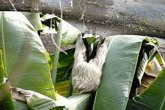GREEN-WORLD (ddsnet) Tags: animals sony hsinchu taiwan 99    slt   peipu greenworld  singlelenstranslucent 99v