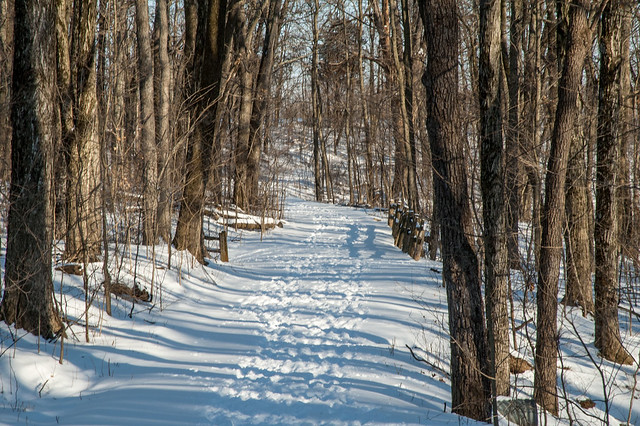 Leonard Springs Nature Park - February 7, 2014