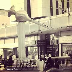 Sam photographer (سامر اللسل) Tags: me rose follow jeddah followme البحرين منصوري عمان تصويري جدة الباحه مصور الطائف فوتوغرافي الجنوب {flickrandroidapp}:{filter}=none {vision}:{outdoor}=0777 {vision}:{text}=0671