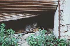 miau (fotosintetica) Tags: plants green cat rusted iphone vagabond vsco iphone5s vscocam