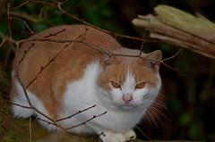 901-02L (Lozarithm) Tags: heddington churchfarm farms cats k50 55300 justpentax hdpda55300mmf458edwr pentax zoom