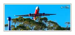 Air Asia (Brett Huch Photography) Tags: plane australia planes aussie