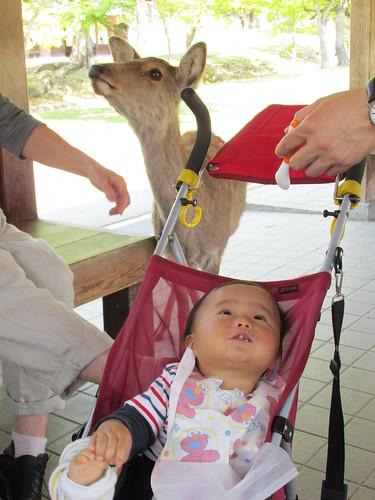 Pique-nique en famille, Nara, Japon