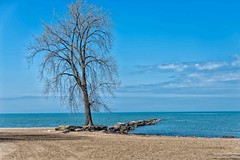 The Tree and Pier (jphenney) Tags: ohio lakeerie piers huntingtonbeach bayvillage