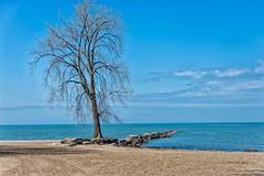 The Tree and Pier (jphenney) Tags: ohio lakeerie piers huntingtonbeach bayvillage