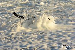 TicoPlayaFlickr0002 (Zalosev) Tags: espaa spain playa andalucia cadiz tico pelota zahara 2014 zaharadelosatunes