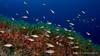 sabana submarina (Jaime Franch) Tags: diving ibiza formentera buceo baleares juvenil labota tokinaatx107dxfisheyeaf1017mmf3545 symphodusocellatus mediterráneo visemanafotografíasubmarinaformentera tordoocelado