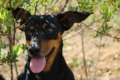 Tel (Ana Domitila) Tags: dog nature animal natureza cachorro cerrado nophotoshop fofo nofilter