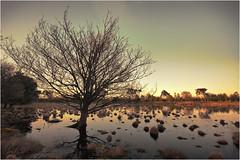 Strijbeekse heide B, mei 2016 (cees van gastel) Tags: trees sunset nature netherlands skyline landscape zonsondergang bomen outdoor horizon natuur landschap noordbrabant sigma1020mm strijbeekseheide ceesvangastel canoneos40d