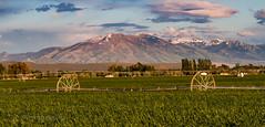 22 May 2016j (JC's Fotos) Tags: thomas id idaho sprinkler irrigation blackfoot winterwheat mountputnam