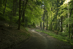 Through the forest (elenamalossini) Tags: road street wood travel trees italy mountain plant green nature colors forest landscape nikon adventure exploration pathway