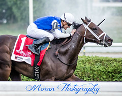 Tepin (EASY GOER) Tags: horse canon mark saratoga iii racing 5d races spa equine thoroughbreds filly