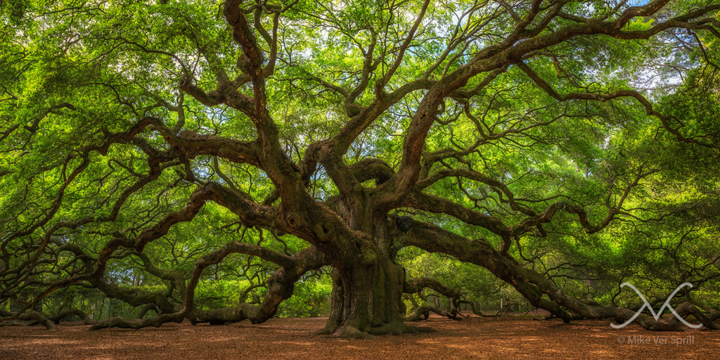 Tree Service On Edisto Island Sc
