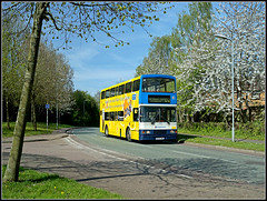 The Daffodil and Blossom (Jason 87030) Tags: road charity camera flower bus tree nice flickr pretty shot blossom tag wheels northamptonshire cancer picture fave views daffodil trunk vehicle bud lovely alpha amateur nurses bizarre northants d2 doubledecker mariecurie daventry ilce 16694 r694dnh sonya6000 spekedrive