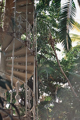 Spiral staircase (RoYaLHigHnEsS1) Tags: park kewgardens plant color canonav1 green london film leaves richmond palm iso greenhouse 200 agfa