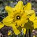 Giardino Primavera 2016-005