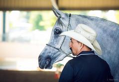 (Jen MacNeill) Tags: man lexington ky halter handler equine horseman straightegyptian