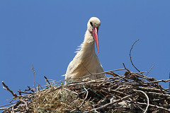 """portrait_storch • <a style=""""font-size:0.8em;"""" href=""""http://www.flickr.com/photos/137809870@N02/27130352182/"""" target=""""_blank"""">View on Flickr</a>"""