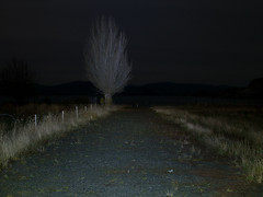 Camino a la playa (Mauro Pesce) Tags: chile road longexposure nightphotography autumn patagonia tree night dark olympus otoo remote omd lagogeneralcarrera aysen aysn m43 em5 puertosanchez puertosnchez