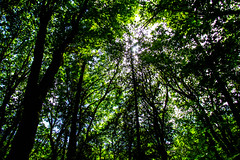 Canopy (ian.kobylanski) Tags: trees plants canada texture nature leaves vancouver forest island waterfall rainforest rocks bc victoria goldstream jungle canopy dense