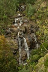 Masons Falls (damdiv) Tags: longexposure nature water forest waterfall australia victoria kinglakenationalpark longexpo kinglakejune2016