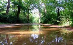 IMG_0062x (gzammarchi) Tags: strada italia natura paesaggio ravenna bosco riflesso pozzanghera marinaromea sterrato