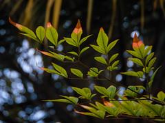 colorido em folhas (Gigica Machado) Tags: colorful colorido leafs folhas colorfulleaf green verde natureza naturaleza naturale outside alcatel sony nature brasil
