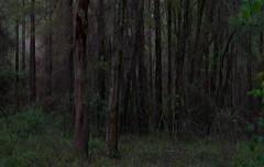forgotten (Alvin Harp) Tags: trees nature forest march travels florida sony 2016 naturesbeauty teamsony sonya7rii alvinharp
