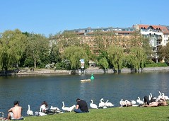 People, Swans, and Willows (mikecogh) Tags: people berlin grass river swans topless sunbathing riverbanks willowtrees